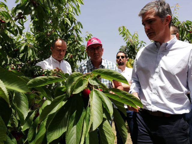 La cereza sobrepasa las 3.000 toneladas de producción en el Altiplano y Noroeste en la campaña de fruta de este año - 1, Foto 1