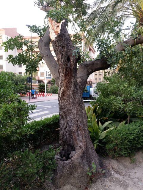 La caída de ramas de un algarrobo en La Cubana obliga a su tala parcial, Foto 3