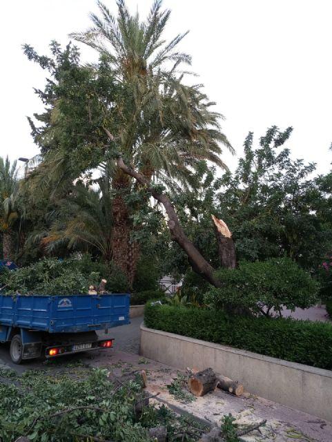 La caída de ramas de un algarrobo en La Cubana obliga a su tala parcial, Foto 4