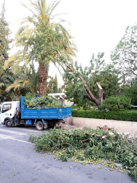 La caída de ramas de un algarrobo en La Cubana obliga a su tala parcial, Foto 5