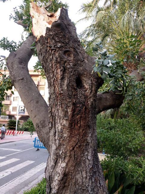 La caída de ramas de un algarrobo en La Cubana obliga a su tala parcial, Foto 6