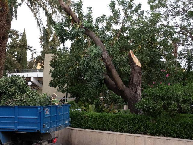 La caída de ramas de un algarrobo en La Cubana obliga a su tala parcial, Foto 8