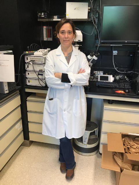 Investigadores de la UMU y el IMIB descubren una proteína del espermatozoide esencial para que ocurra la fecundación - 2, Foto 2