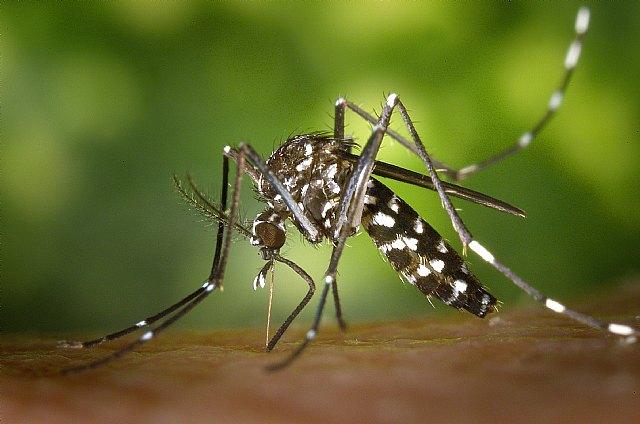 Un equipo de la UOC desarrolla una tecnología para identificar mosquitos tigre - 1, Foto 1