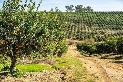 9 de septiembre, Día Mundial de la Agricultura: España, pionera en agricultura sostenible y comprometida - 1, Foto 1