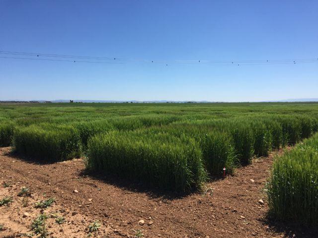 El Informe Noleppa advierte que sin la mejora vegetal será imposible alcanzar el Pacto Verde Europeo - 1, Foto 1