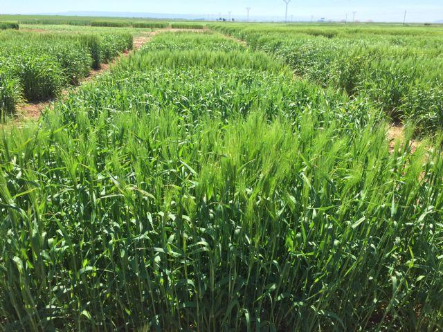 El Informe Noleppa advierte que sin la mejora vegetal será imposible alcanzar el Pacto Verde Europeo - 2, Foto 2