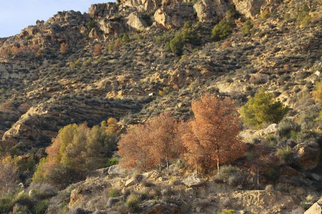 Tala de pinar seco en la sierra de La Muela, Foto 1