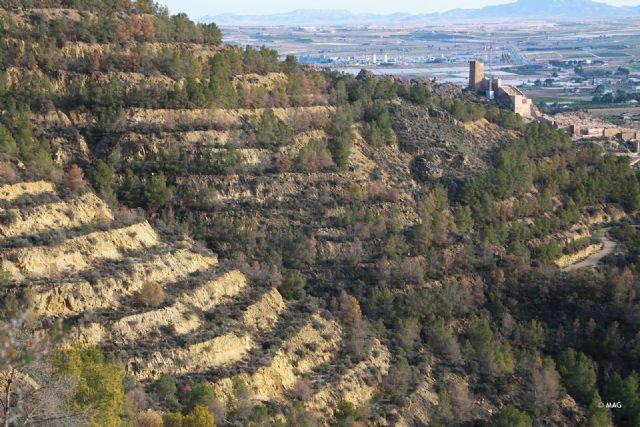 Tala de pinar seco en la sierra de La Muela, Foto 3