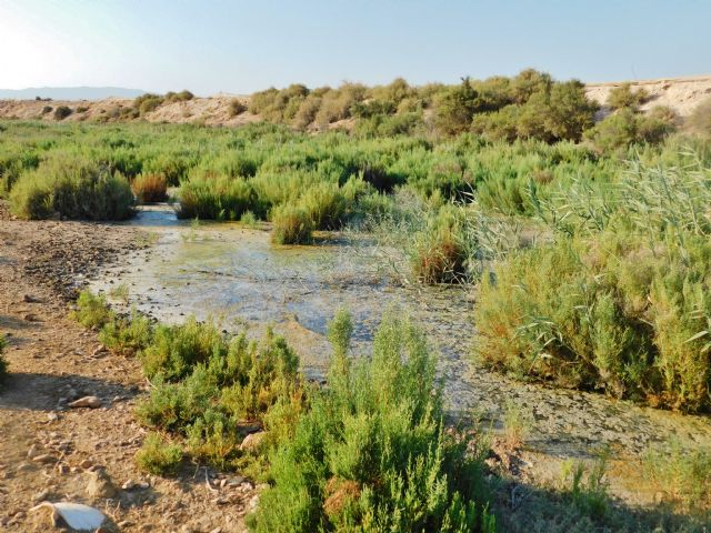 Ecoembes y ACUDE colaborarán para la mejora de fincas municipales de Alhama de Murcia, Foto 3