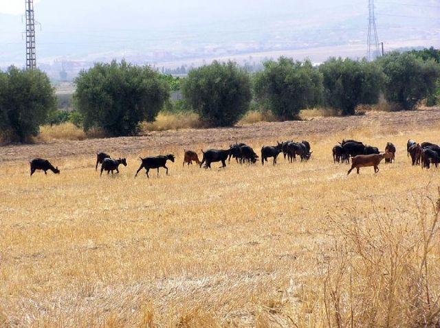 Se convoca el procedimiento para adjudicar los aprovechamientos de pastos de los montes de utilidad pública del Ayuntamiento, Foto 1
