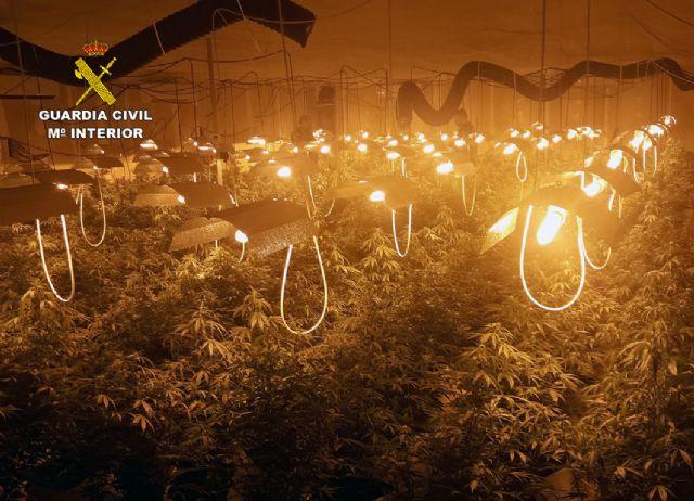 La Guardia Civil desmantela una plantación de marihuana en una nave industrial de Albudeite - 3, Foto 3