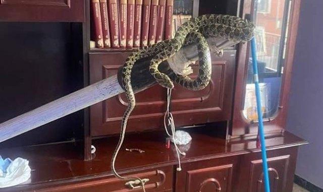 Aparece una serpiente dentro de una vivienda de Totana