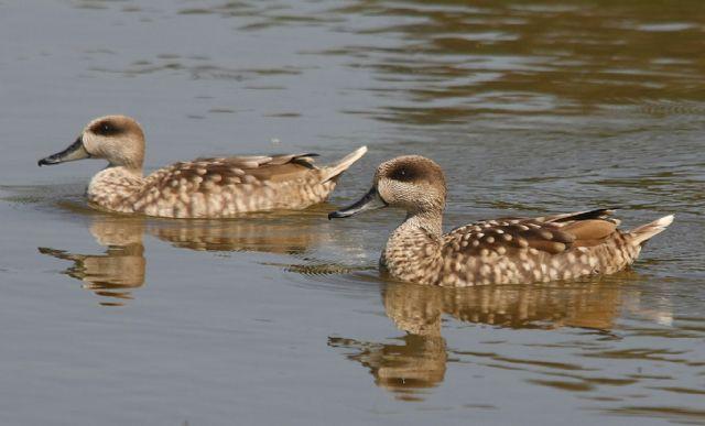 ANSE y SEO/BirdLife adquiren 55 hectáreas de humedales en el Parque Natural de El Hondo - 1, Foto 1