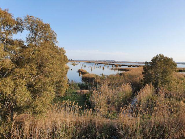 ANSE y SEO/BirdLife adquiren 55 hectáreas de humedales en el Parque Natural de El Hondo - 2, Foto 2
