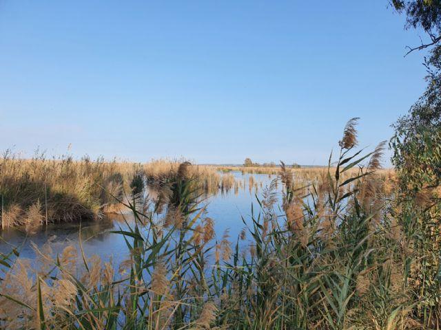 ANSE y SEO/BirdLife adquiren 55 hectáreas de humedales en el Parque Natural de El Hondo - 3, Foto 3