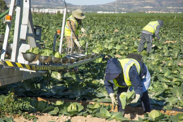 El 75% de los murcianos considera fundamental la actividad agraria - 1, Foto 1