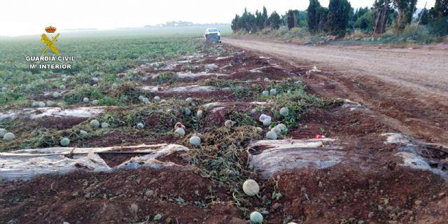 La Guardia Civil investiga en Cabo de Palos a doce menores por causar daños en una finca agrícola - 2, Foto 2