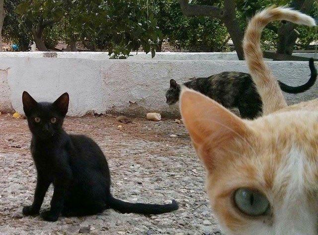 Recuerdan la obligatoriedad de la vacunación antirrábica de perros, gatos y hurones., Foto 1