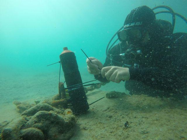 ANSE obtiene avances sobre el comportamiento de la anguila europea en el Mar Menor - 1, Foto 1