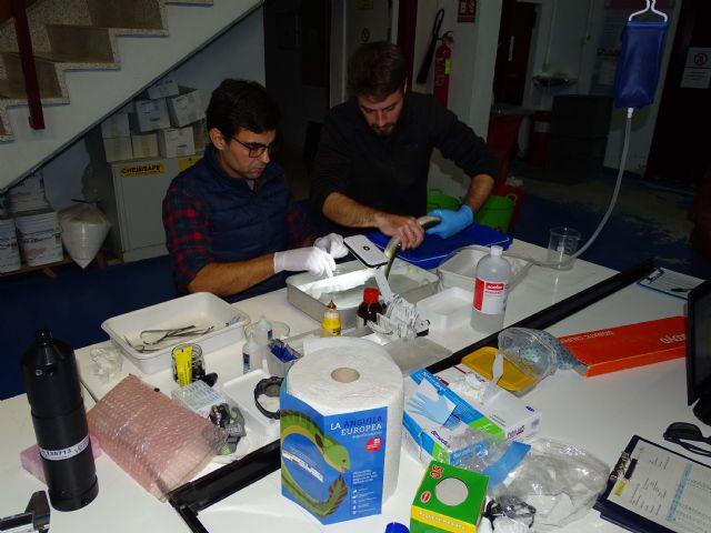 ANSE obtiene avances sobre el comportamiento de la anguila europea en el Mar Menor - 3, Foto 3