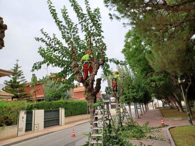 Comienza la poda de las más de 20.000 moreras que hay en el municipio de Murcia - 1, Foto 1
