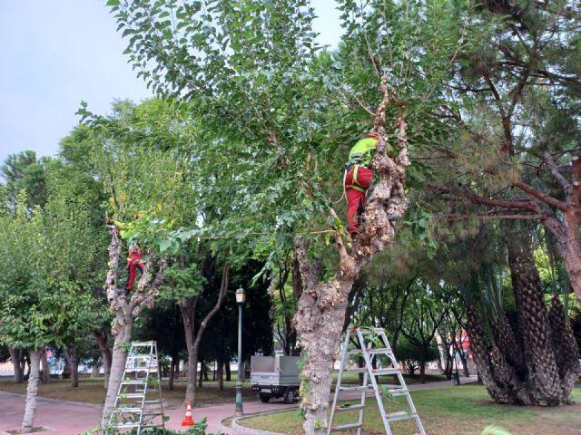 Comienza la poda de las más de 20.000 moreras que hay en el municipio de Murcia - 2, Foto 2