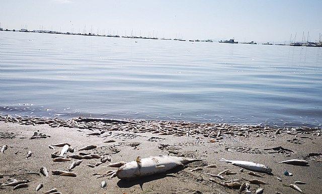 Pacto por el Mar Menor considera insuficientes las medidas urgentes propuestas por el Consejo de la Comunidad Autónoma para recuperar la laguna - 1, Foto 1