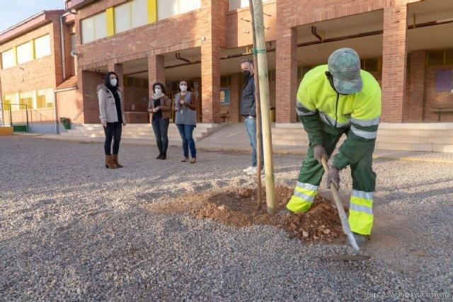 Comienza la plantación de 70 nuevos árboles en 21 centros escolares del municipio - 1, Foto 1