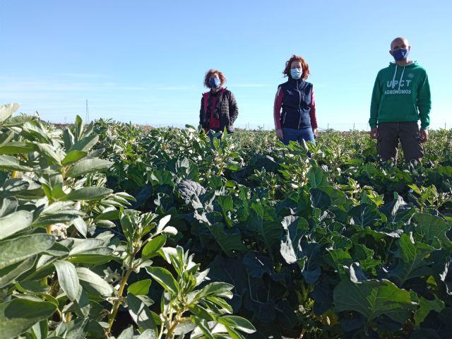 Mejoran la rentabilidad y sostenibilidad de cultivos hortícolas asociándolos a leguminosas - 1, Foto 1