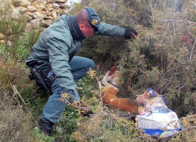 La Guardia Civil investiga a dos personas por el sacrificio violento de dos perros de caza - 3, Foto 3