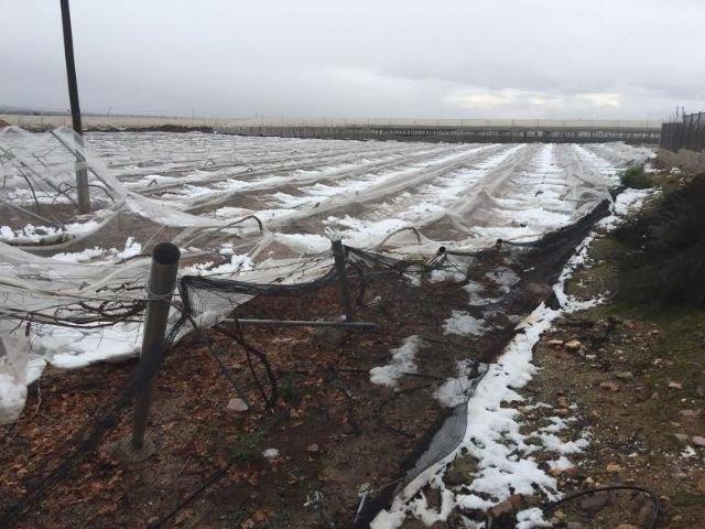 COAG Murcia considera insuficientes y arbitrarias las rebajas fiscales para los cultivos dañados por la gota fría de diciembre y otras inclemencias climatológicas en 2016, Foto 1