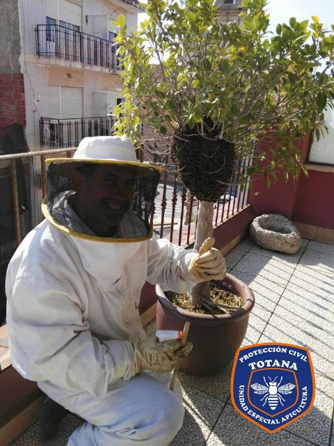 The Civil Protection Beekeeping Unit activates the bee swarm collection device, coinciding with spring flowering - 2