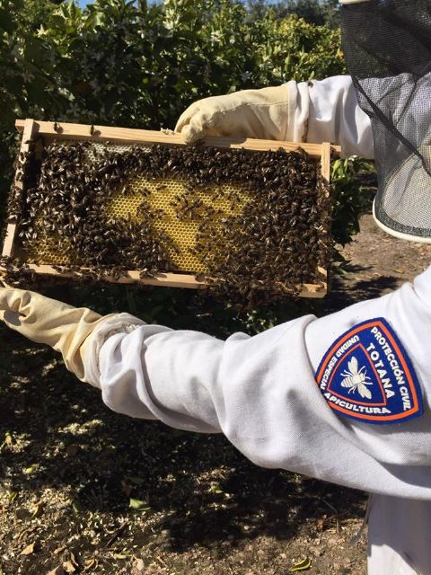 The Civil Protection Beekeeping Unit activates the bee swarm collection device, coinciding with spring flowering - 3