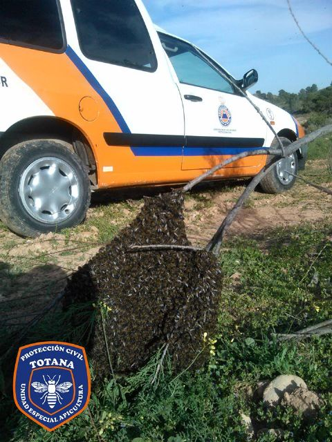 The Civil Protection Beekeeping Unit activates the bee swarm collection device, coinciding with spring flowering - 5