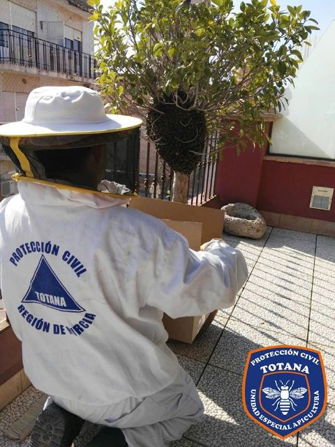 The Civil Protection Beekeeping Unit activates the bee swarm collection device, coinciding with spring flowering - 8