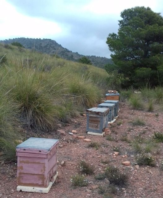 It is awarded the beekeeping until May 31, 2023 of the public mountains of Totana - 4
