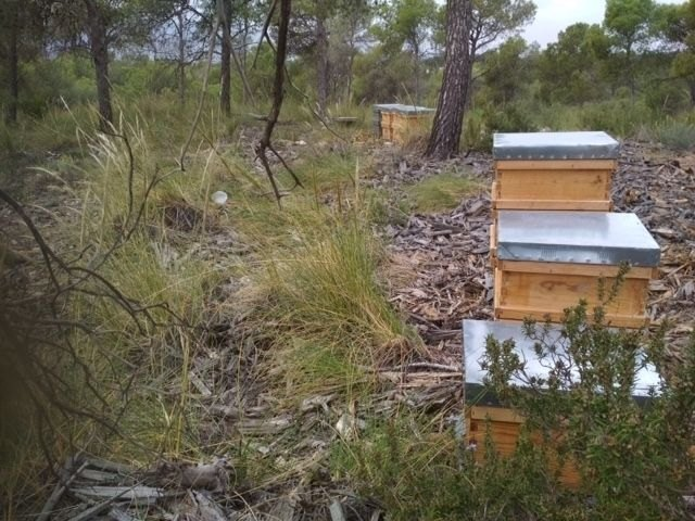 It is awarded the beekeeping until May 31, 2023 of the public mountains of Totana - 1