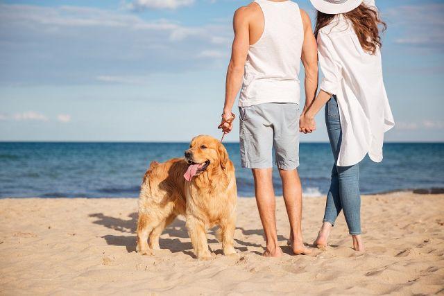 10 motivos por los que los viajes dog-friendly son una oportunidad para el turismo en España