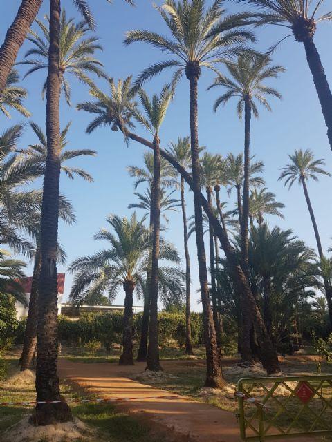 Cambiemos Murcia propone plantar nuevos ejemplares en el Palmeral de Santiago y Zaraiche - 2, Foto 2