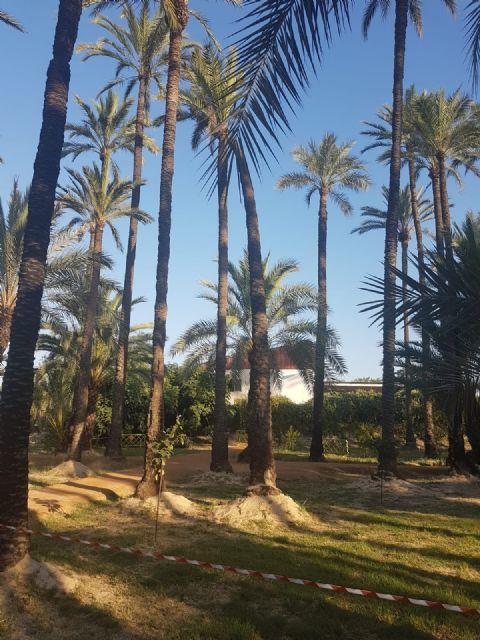 Cambiemos Murcia propone plantar nuevos ejemplares en el Palmeral de Santiago y Zaraiche - 4, Foto 4