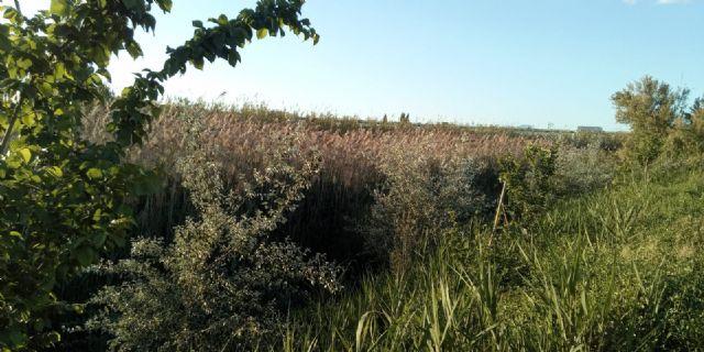 Aguas de Murcia y ANSE renuevan el convenio para el fomento de la biodiversidad en Murcia - 1, Foto 1