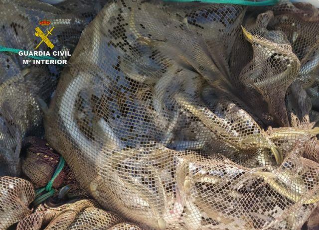 La Guardia Civil investiga a cuatro pescadores por la captura de anguilas en el Mar Menor - 2, Foto 2