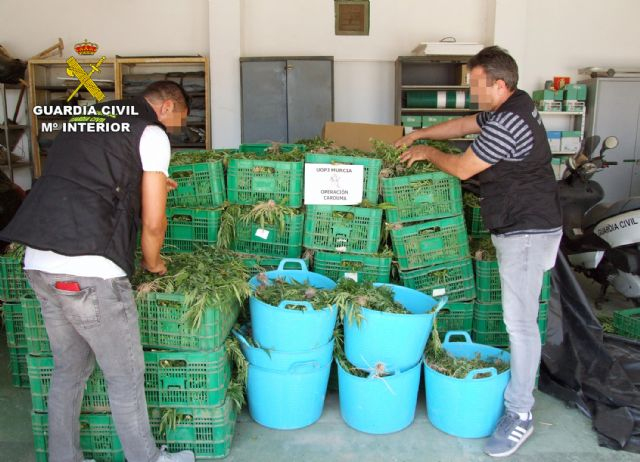 La Guardia Civil desmantela dos invernaderos con 9.000 plantas de marihuana - 1, Foto 1