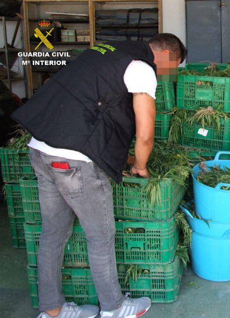 La Guardia Civil desmantela dos invernaderos con 9.000 plantas de marihuana - 2, Foto 2