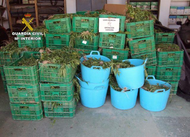 La Guardia Civil desmantela dos invernaderos con 9.000 plantas de marihuana - 3, Foto 3