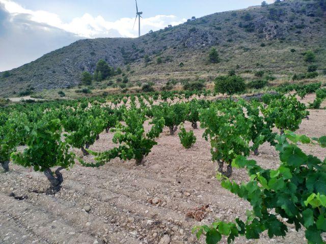 Pleno de medallas para los vinos ecológicos de la DOP Jumilla - 2, Foto 2