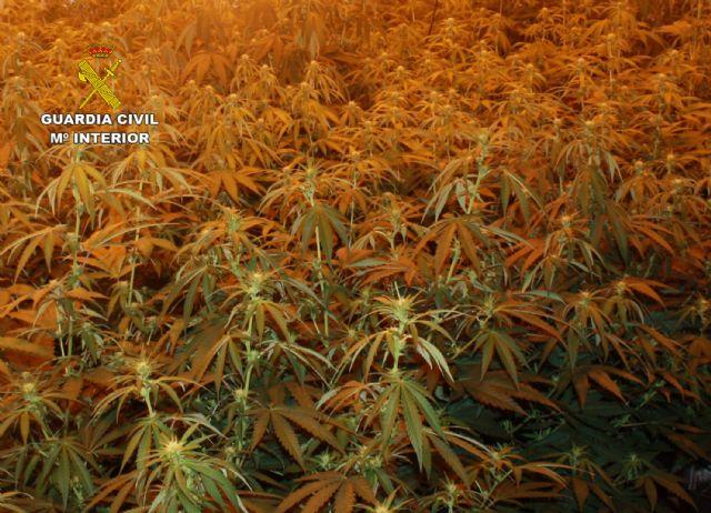 La Guardia Civil desmantela un punto de venta directa de marihuana a consumidores - 4, Foto 4