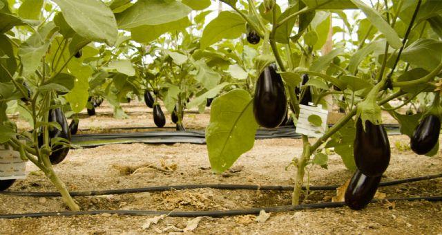 Mitos y verdades sobre la agricultura ecológica - 2, Foto 2