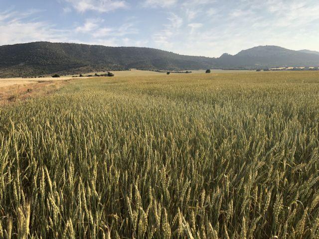 La empresa murciana La Junquera gana uno de los Premios BBVA a los mejores productores sostenibles de España - 1, Foto 1